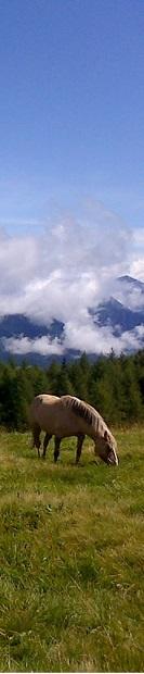 cavallo pascolo montano