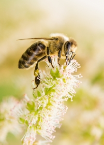 ape fiore montagna