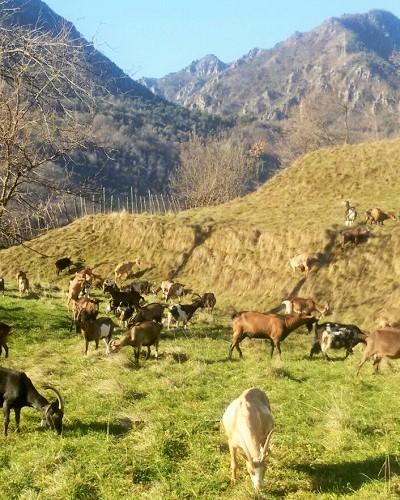 azienda agricola Natalina Denny Denis Ghidotti Cadignano Tremosine lago Garda Brescia